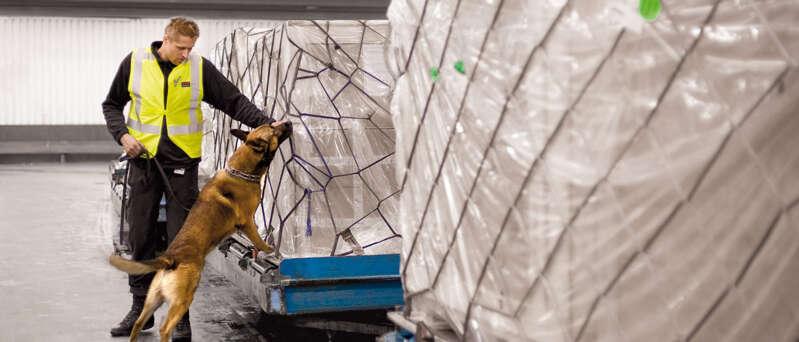 Ein Mitarbeiter durchsucht mit einem Sprengstoffspürhund ein Lagerraum